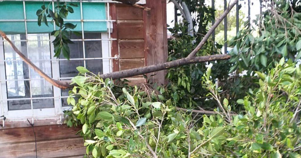 פינוי מפגעים עץ שקרס בסט ניקיון
